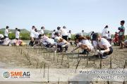 SMEAGキャピタルキャンパス|マングローブの植樹